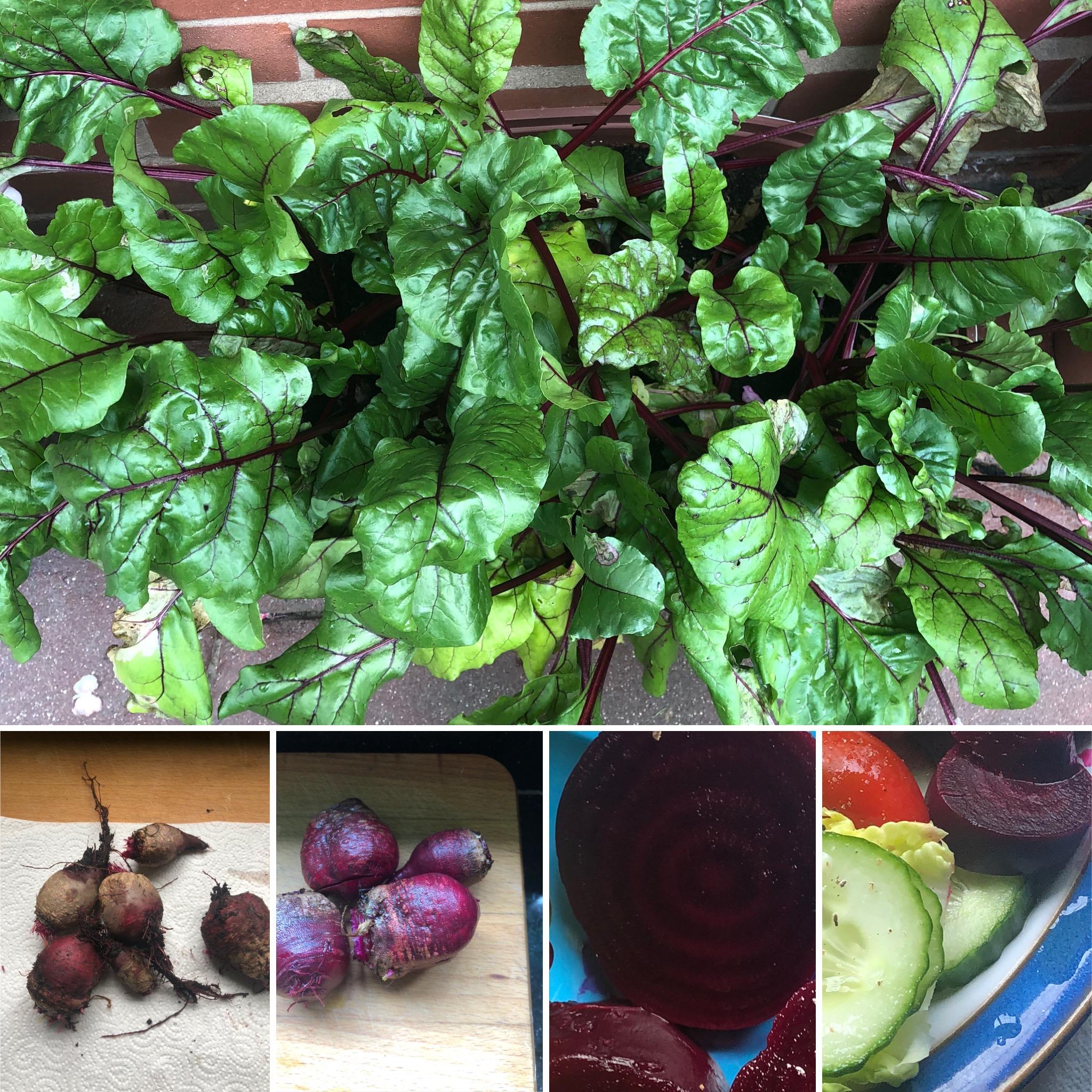 Garden Beetroot to salad