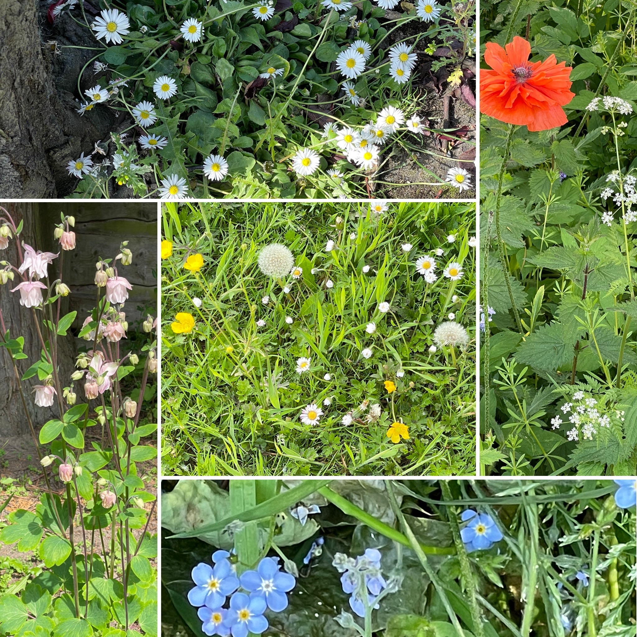 Wildflowers and communication